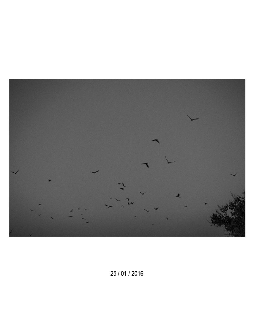 25.01.16.jpg
