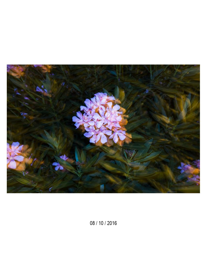 08.10.16.jpg