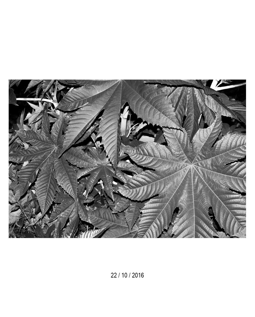 22.10.16.jpg