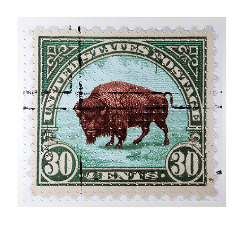 #Frank the Buffalo