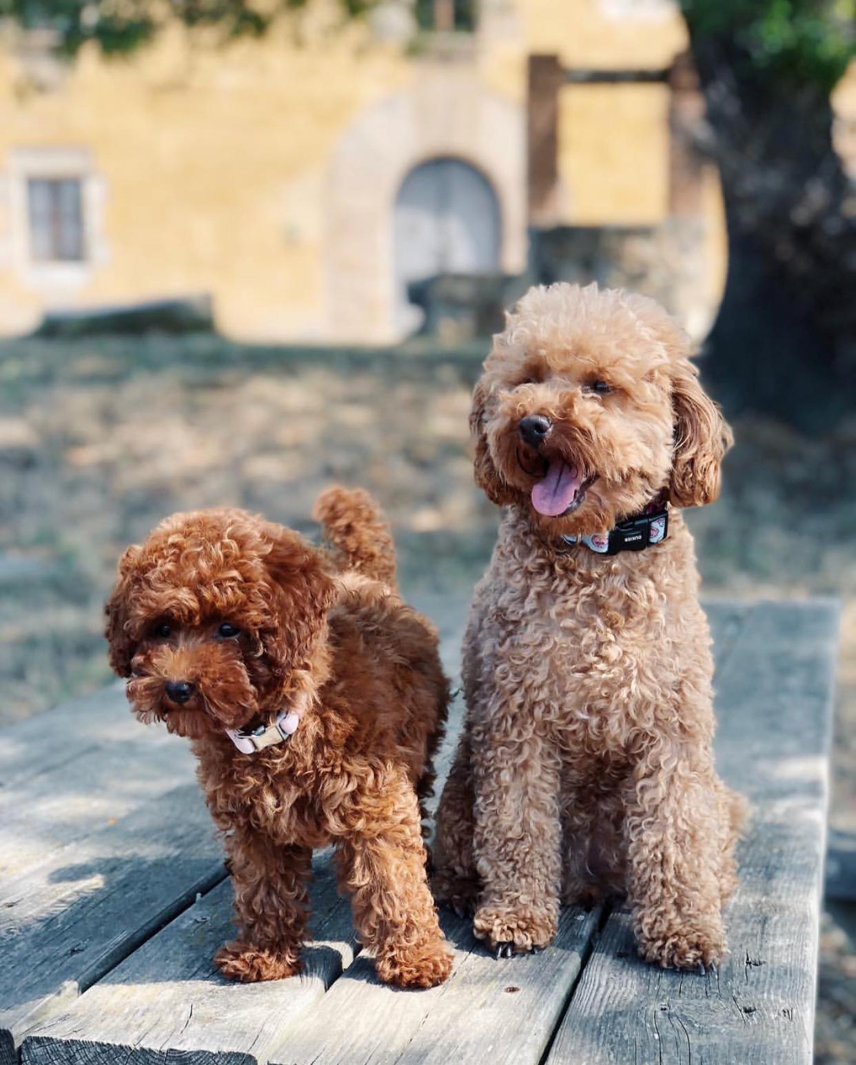 @MISS.BIMBA   Desde Girona, Bimba y Lola son dos aventureras preciosas que siempre dan muy buenos consejos.