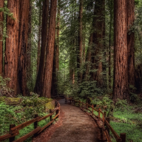 cathedral-grove-rainforest_2560x1440 - Square.jpeg