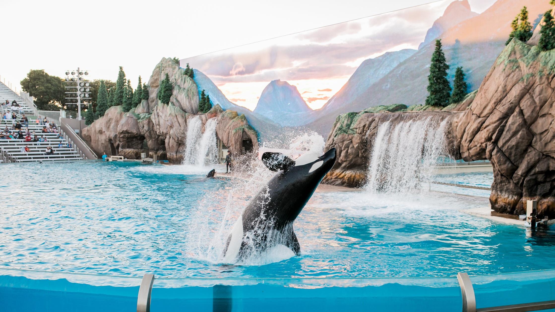 Sea World - Är en av de främsta marina äventyrsparkerna i världen. Här kan du åka karuseller på förmiddagen och klappa delfiner på eftermiddagen. Sea World har något för hela familjen och är definitivt värt ett besök.