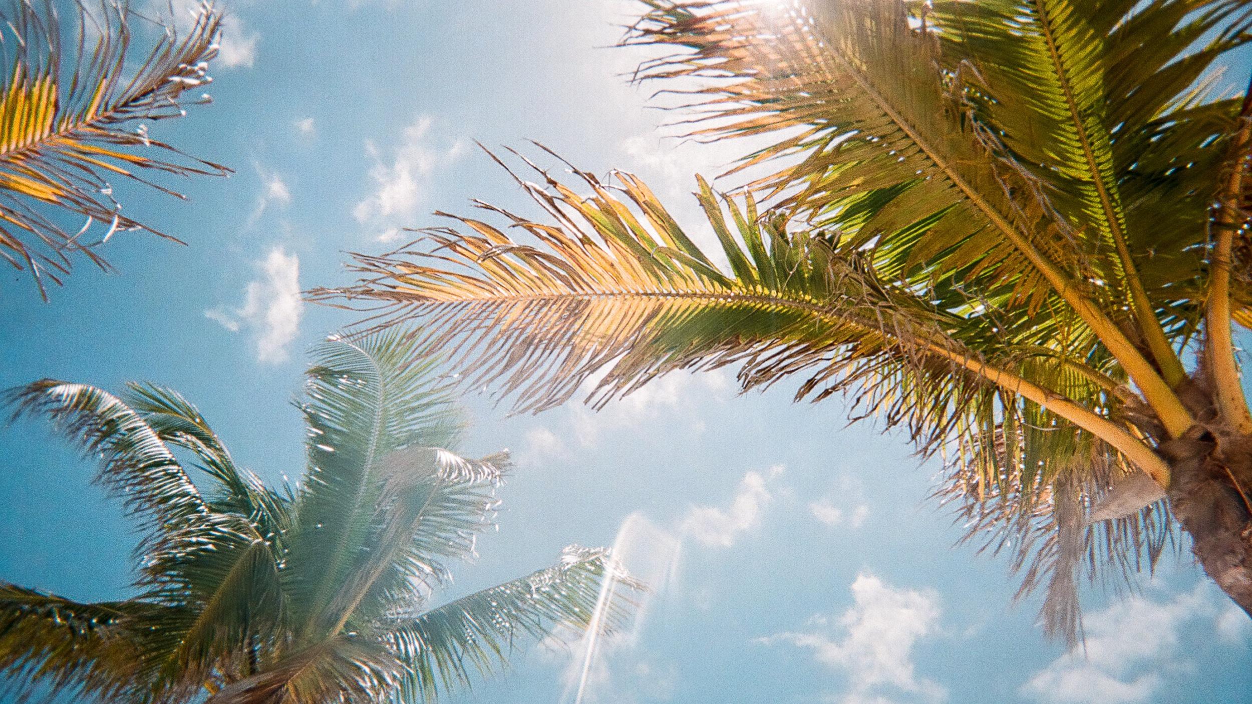 Skräddarsydd resa - Vi skräddarsyr gärna din resa till Florida. Fyll i formuläret och ange dina önskemål. Genom personlig service och idérikedom hjälper vi dig med den perfekta Floridaresan.