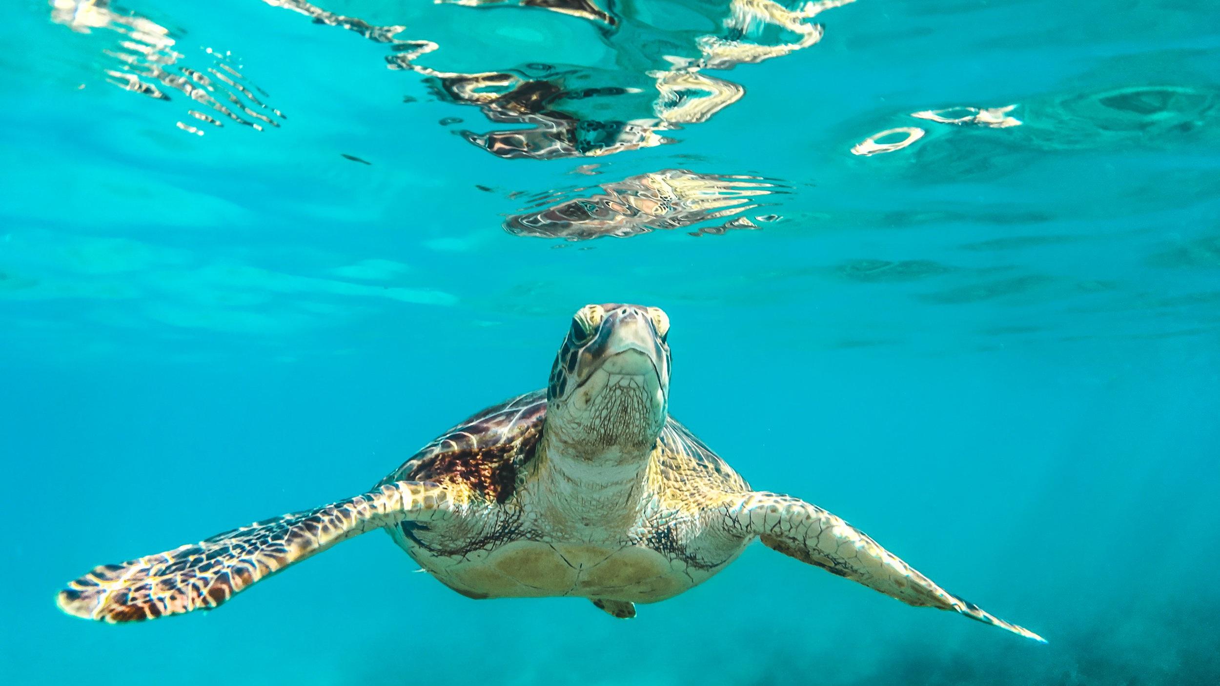 Hanauma Bay - Strax utanför Honolulu ligger Hanauma Bay med sin otroliga natur och som är fantastiskt för snorkling. Hawaiis vatten är fyllt av liv och vid det vackra korallrevet kan du möta både havssköldpaddor och delfiner om du har tur.