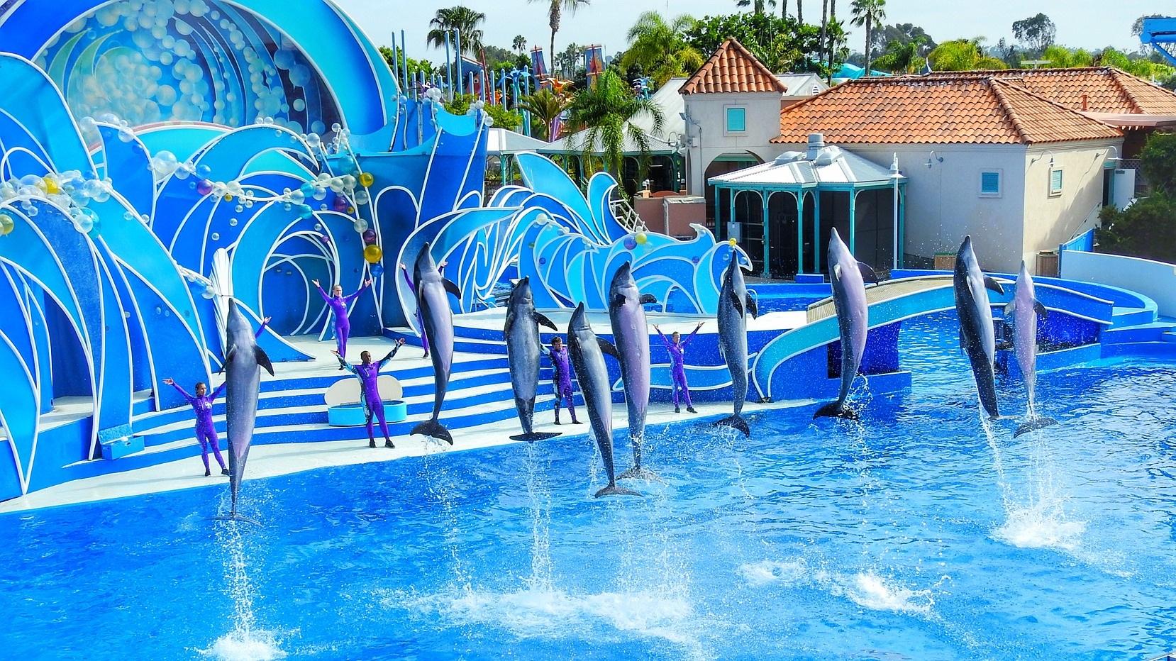 Sea World - Stadens största turistattraktion, Sea World, ligger vid Mission Bay norr om stadens centrum och är på 60 hektar. Här finns delfinshower, en Wild Artic-sektion, massvis av åkattraktioner och mycket mer. Sea World har något för hela familjen.