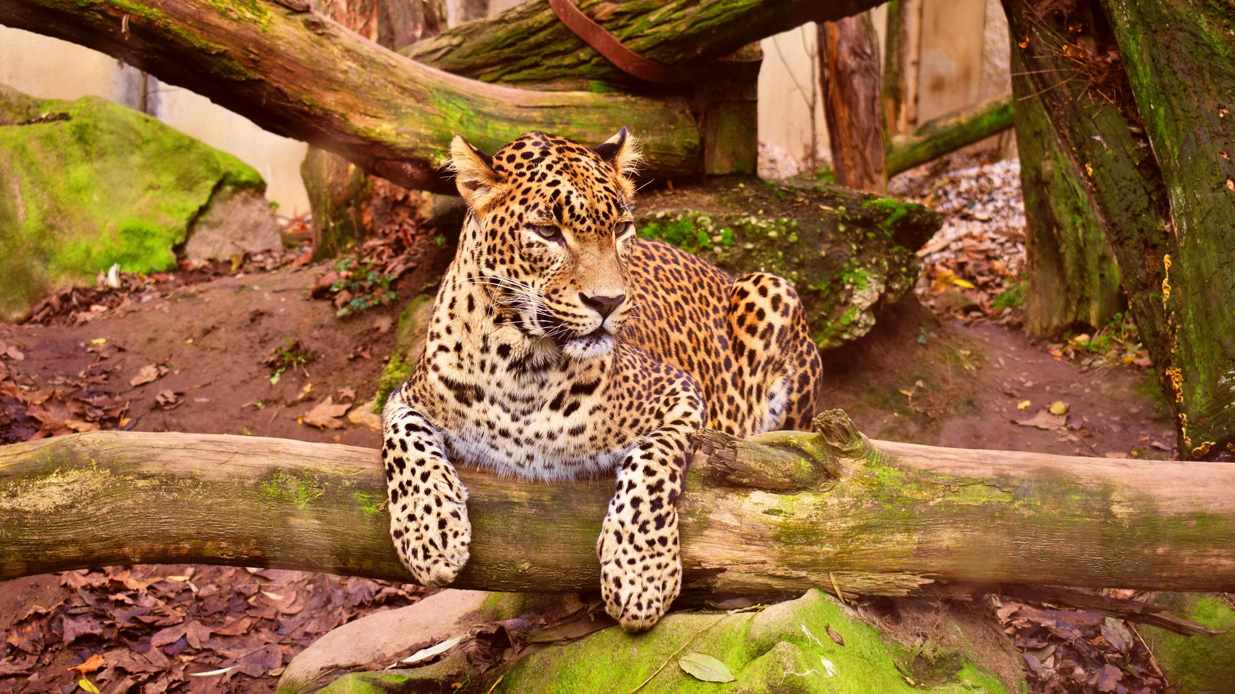 Nashville Zoo - En djurpark är alltid populärt för barnen och ett besök här kan mycket väl vara den perfekta utflykten för barnfamiljen. Parken är ganska liten men gemytlig och det finns många spännande djur att både träffa och titta på, så som pandor, pingviner och många fler.