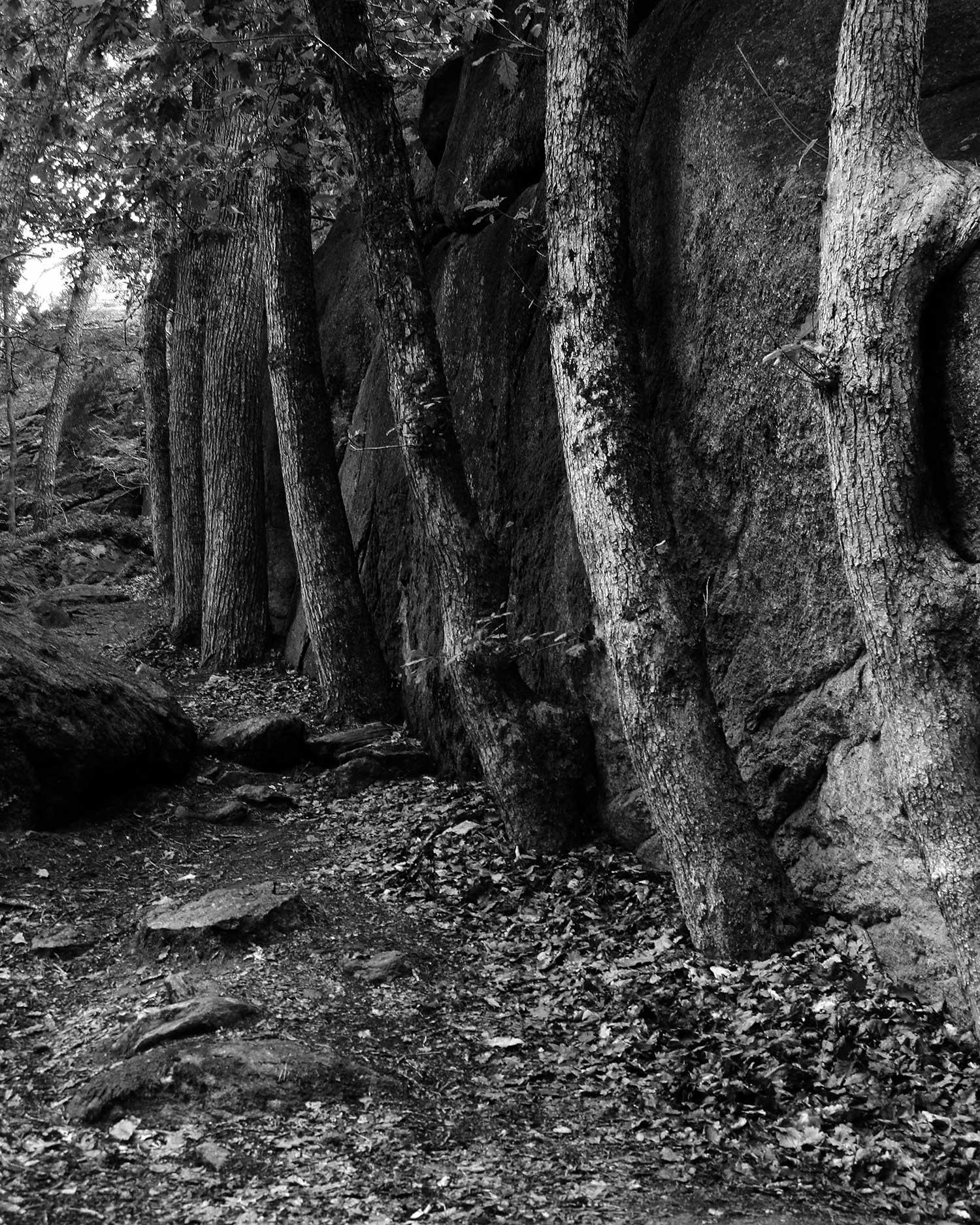 Line of Trees.jpg