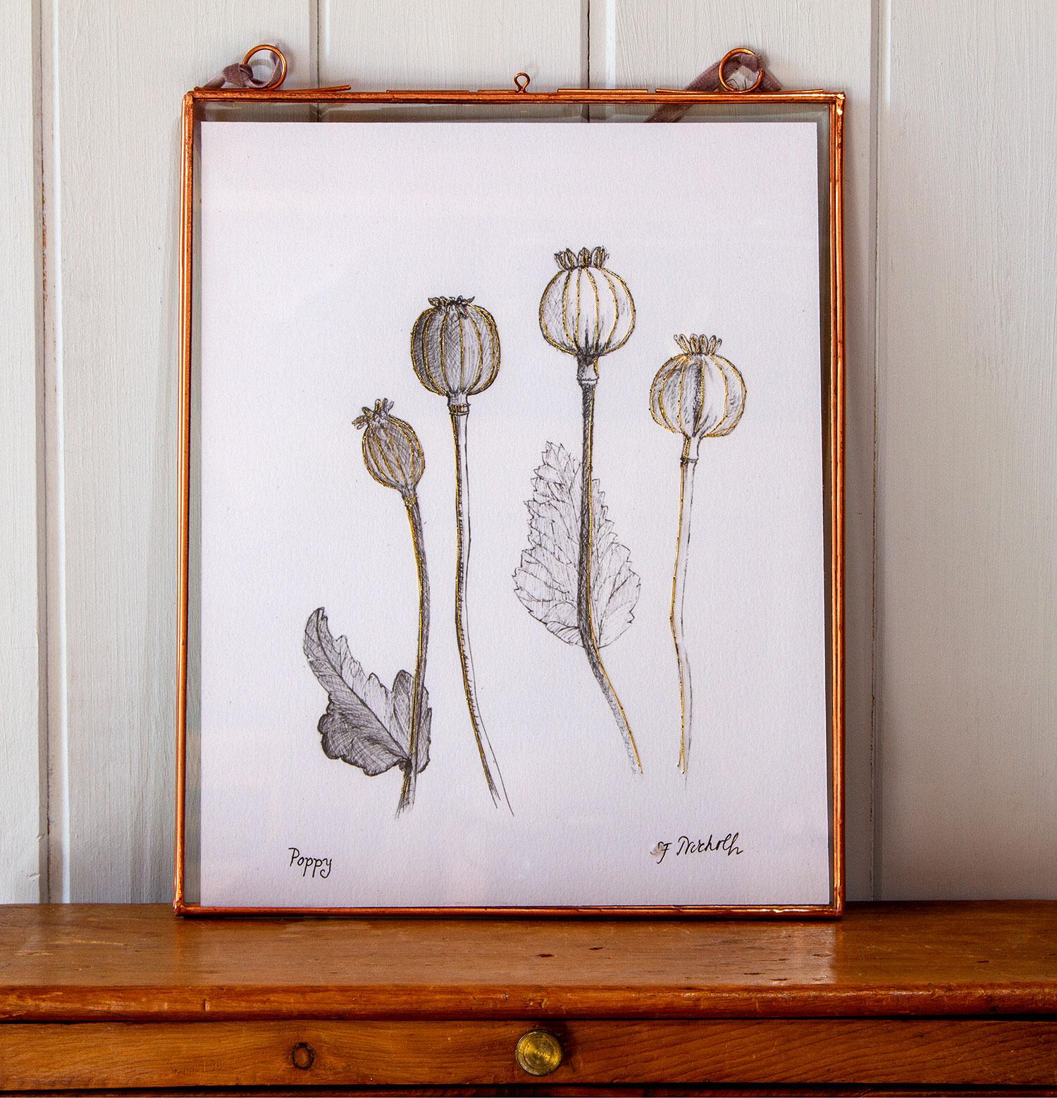 Poppies Plant Portrait