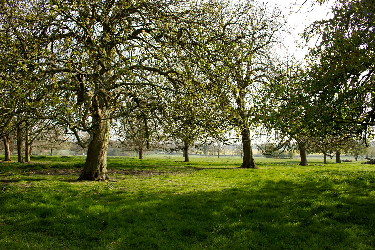 Trees on the Gunby Estate