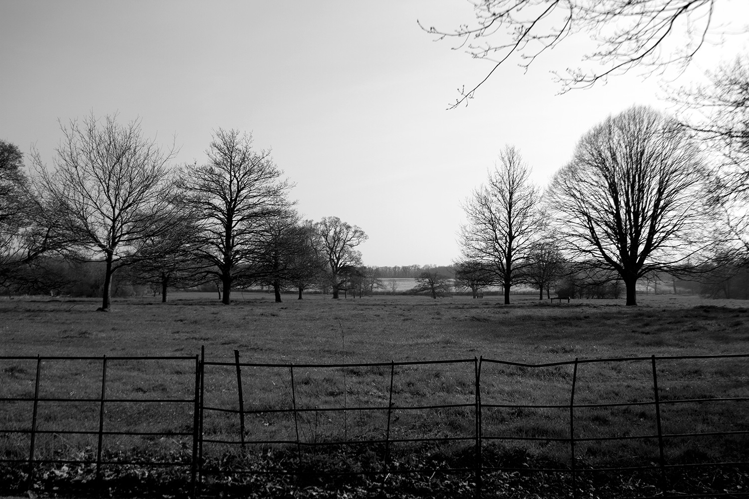 Gunby trees and fence.jpg