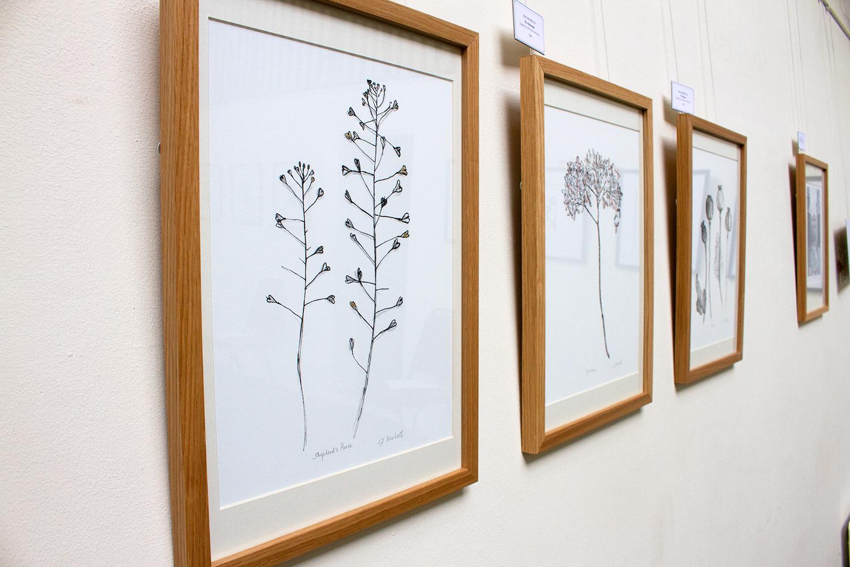 Sue Nicholls - Plant Portraits