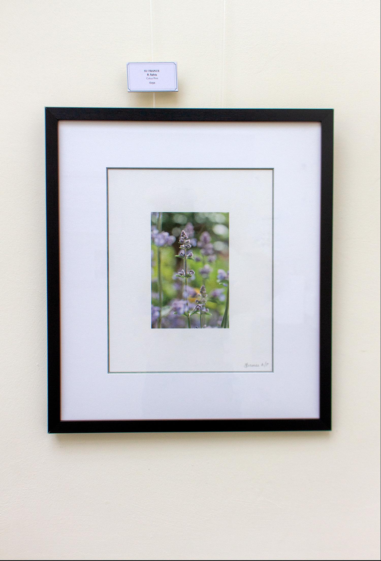 Su France Salvia Photograph