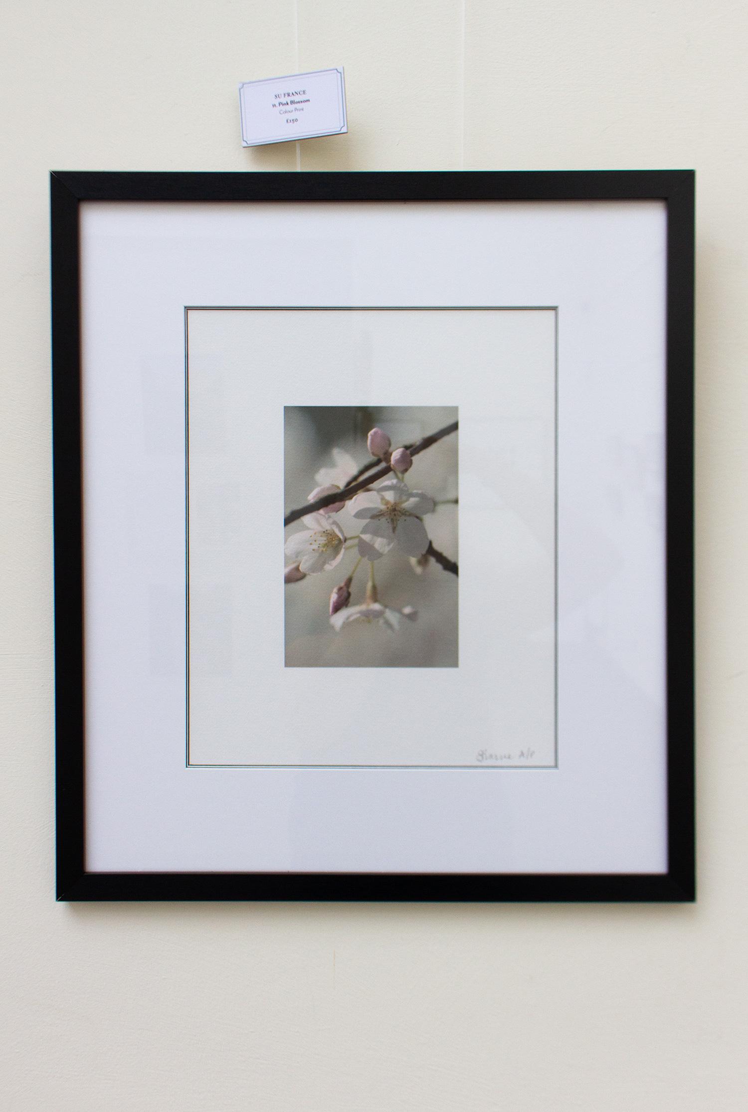Su France - Cherry Blossom