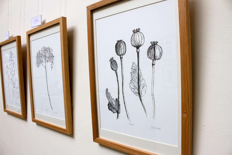 Plant Portraits Series