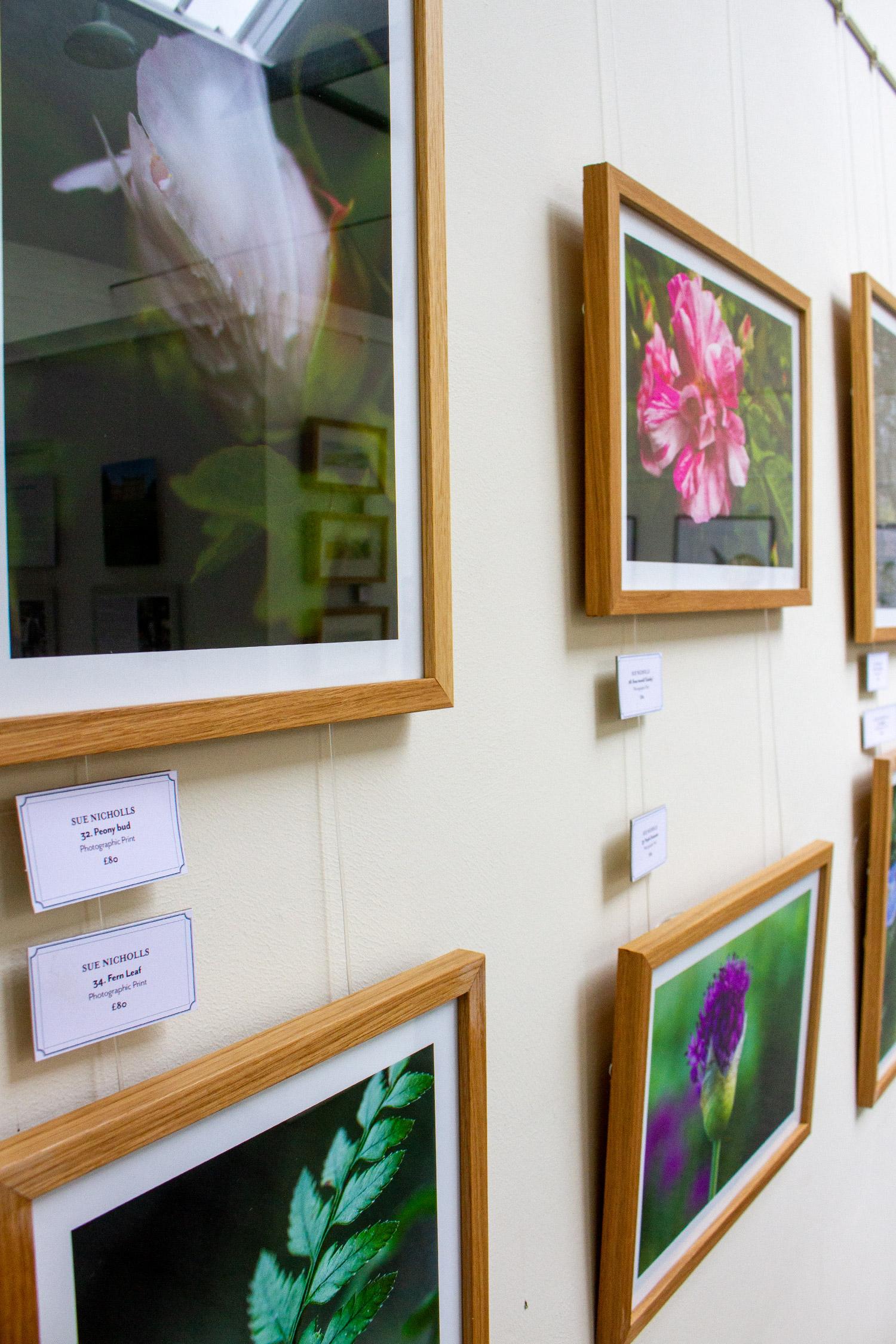 Sue Nicholls Photographic Prints