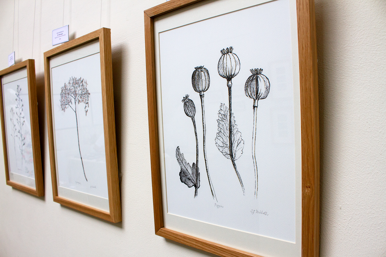 Sue Nicholls Plant Portraits 2.jpg