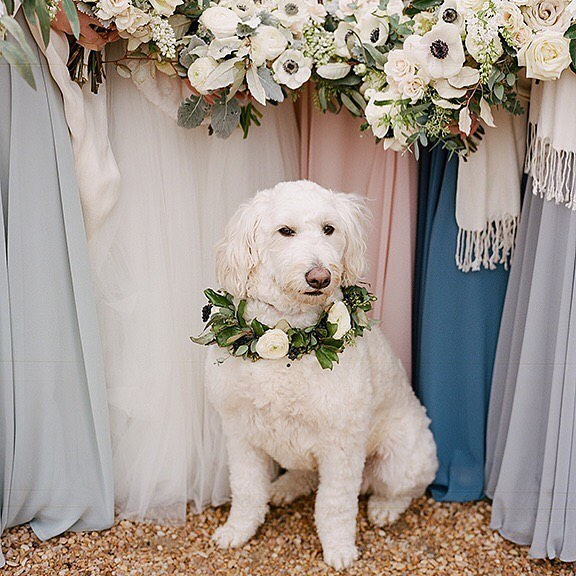 Soft colors and white and black anemones and the perfect pup, too. This image by @jenfariello featuring @orphadesigns and @steelcut_va at @pippinhillfarm is dreamy!  #charlottesvillebride #jenfariellophotography #jenfariello #pippinhill #pippinhillfarm #pippinhillfarmwedding #anemones #dogofhonor #bridesmaids #bridesmaidbouquets #virginiabride #virginiaweddings #charlottesvilleweddings #weddingparty