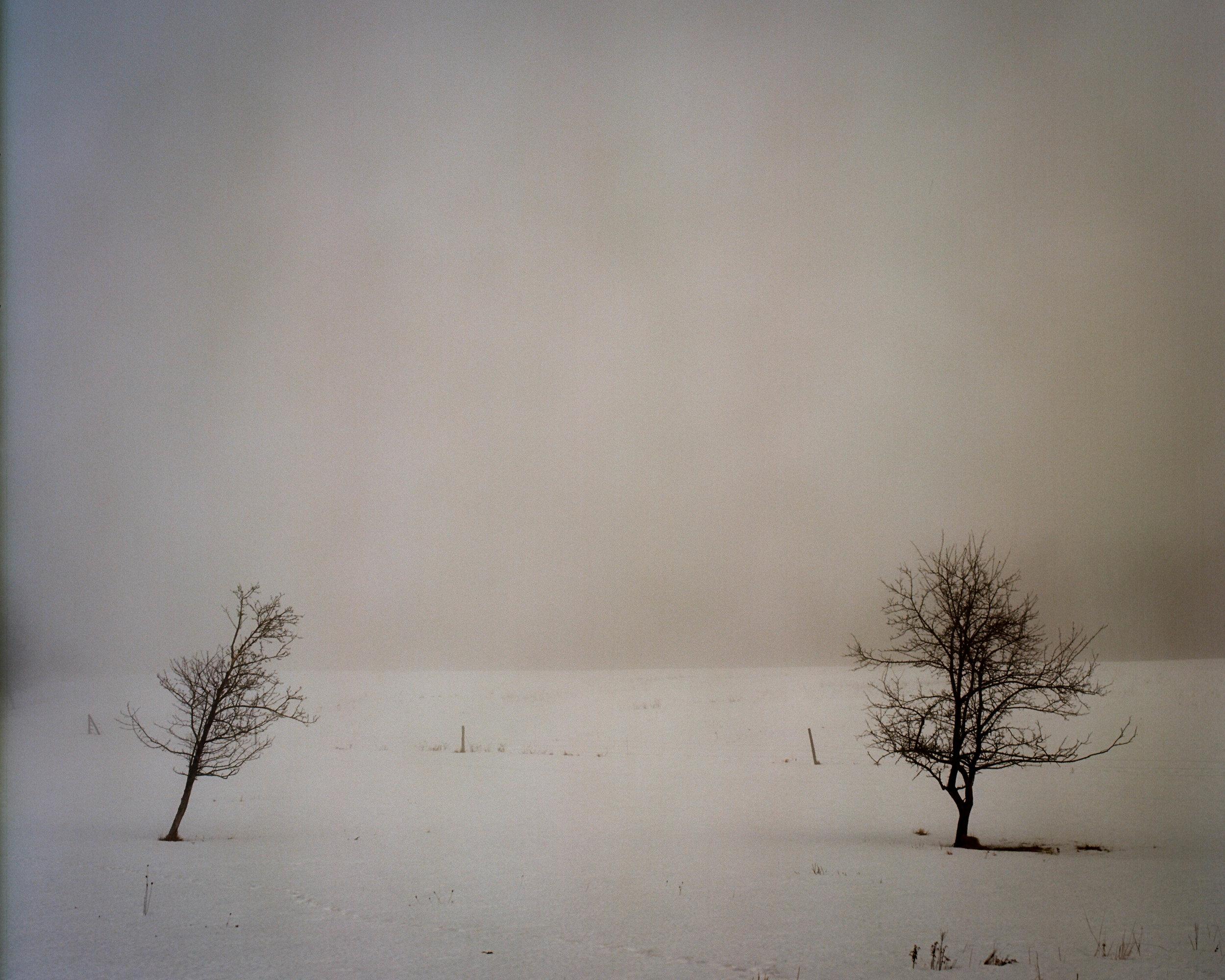 Blue Hill Tree.jpg