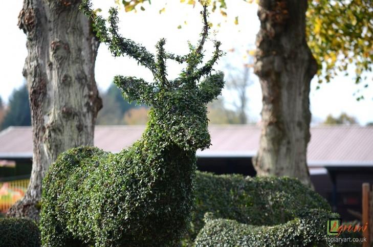 Agrumi - Topiary Art