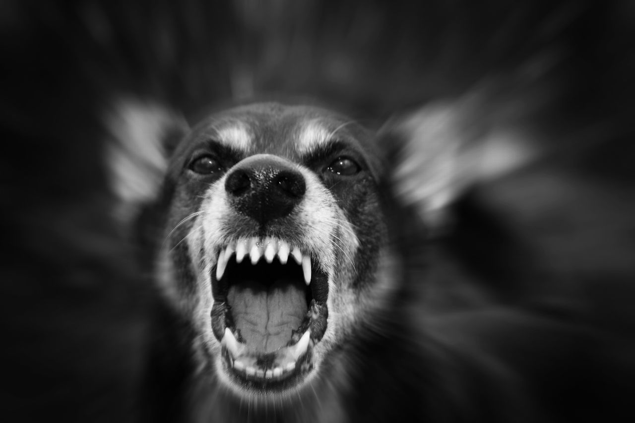 If you have been attacked by a dog, the owner can be held strictly liable for your injuries.