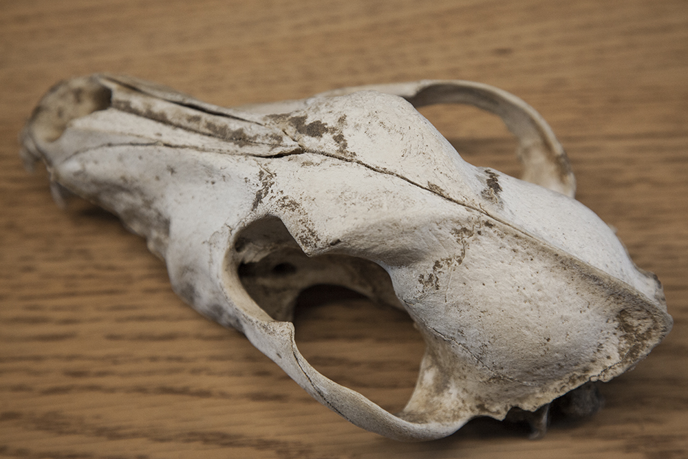 Animal skull inside the interpretive center