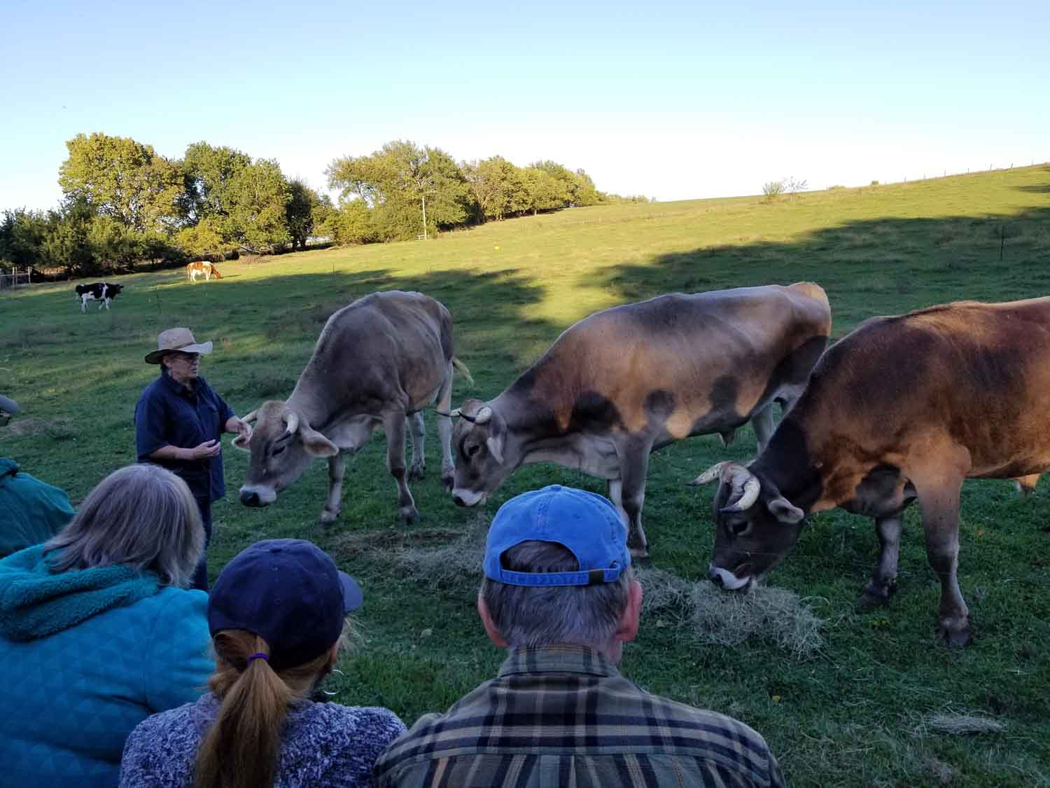 Oxen at Whistle Creek in St. Joseph, Mo. Cindy Weaver, OCTA member and outstanding speaker and educator, informs the group regarding trail history.