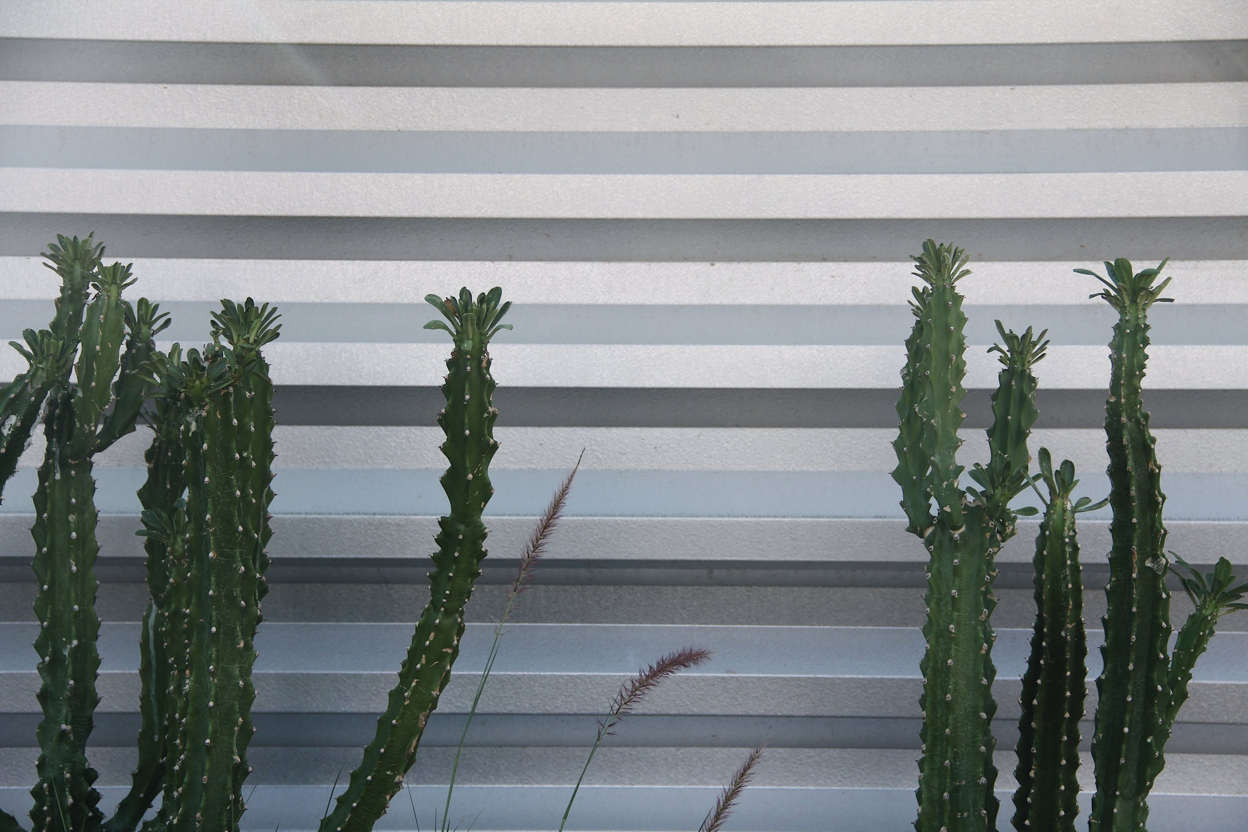 Cacti Aluminum Background.jpg