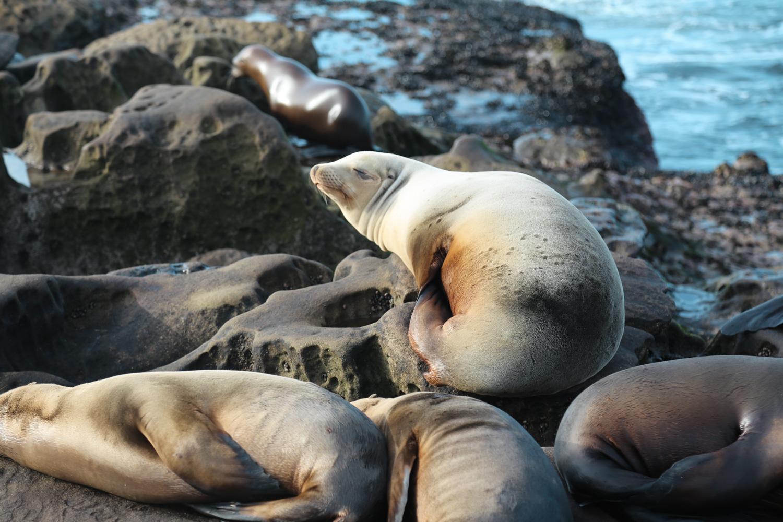 chubby seal.jpg