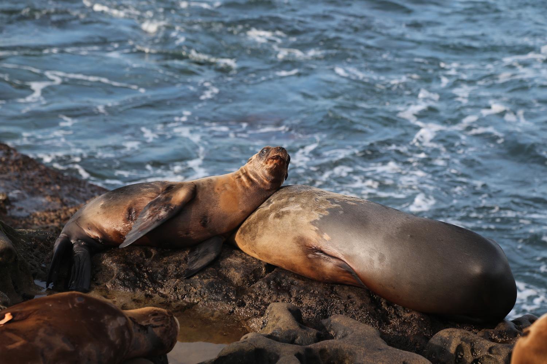 sea lion .jpg