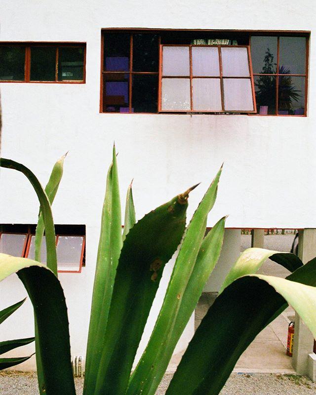 Casa Estudio Diego Riviera. #fullserielinkinbio #35mm #functionalism #architecture . . . . . . . . . . . . . #mexico #mexicocity #architecturephotography #filmphotography #noicemag #lightzine #ifyouleave #somewheremagazine