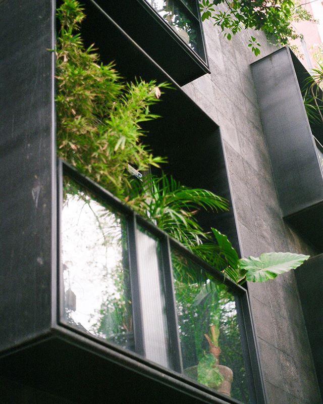 Urban Jungle. 🌱🍃 #tb #50mm #forgottenfilm . . . . . . . . . . . #mexicocity🇲🇽 #lacondesa #architecturephotography #pentaxk1000 #shootfilmstaybroke #igersmexico #professionalwandererla