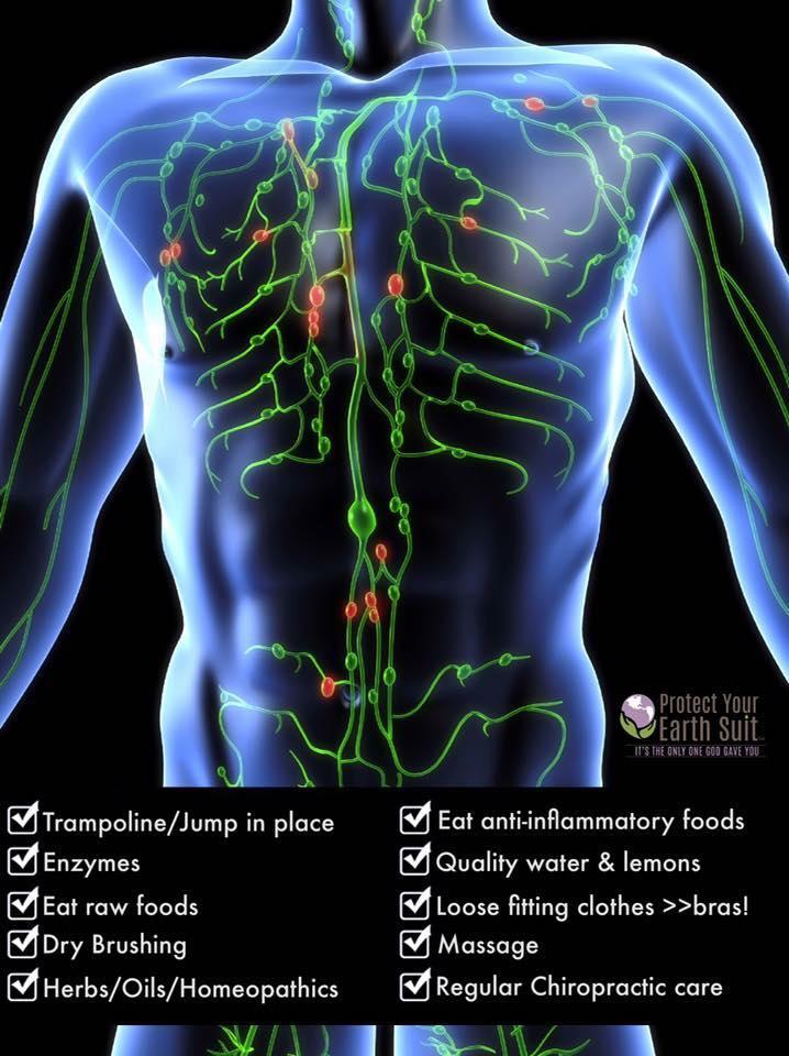 The Lymphatic System.jpg