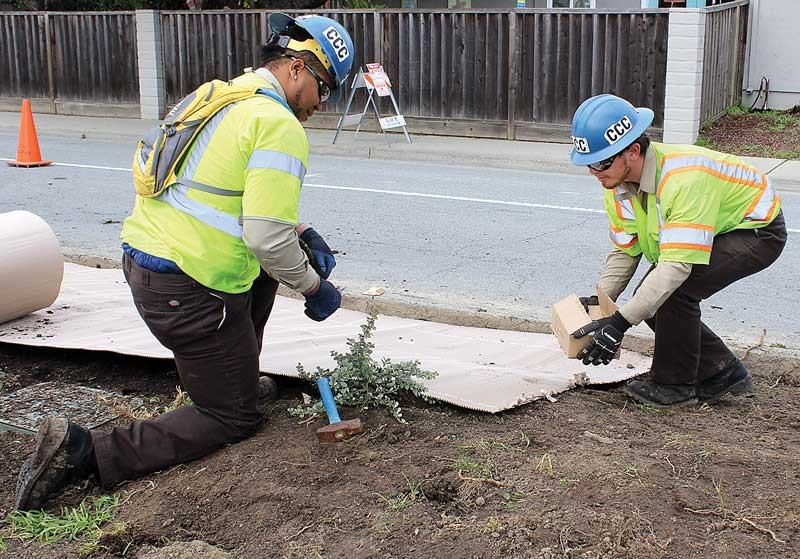 David Williams (left) and Mike Miller of California Conservation Corps help install a native plant landscaping on Bridge Street Wednesday. (Photo by Erik Chalhoub/Register-Pajaronian)