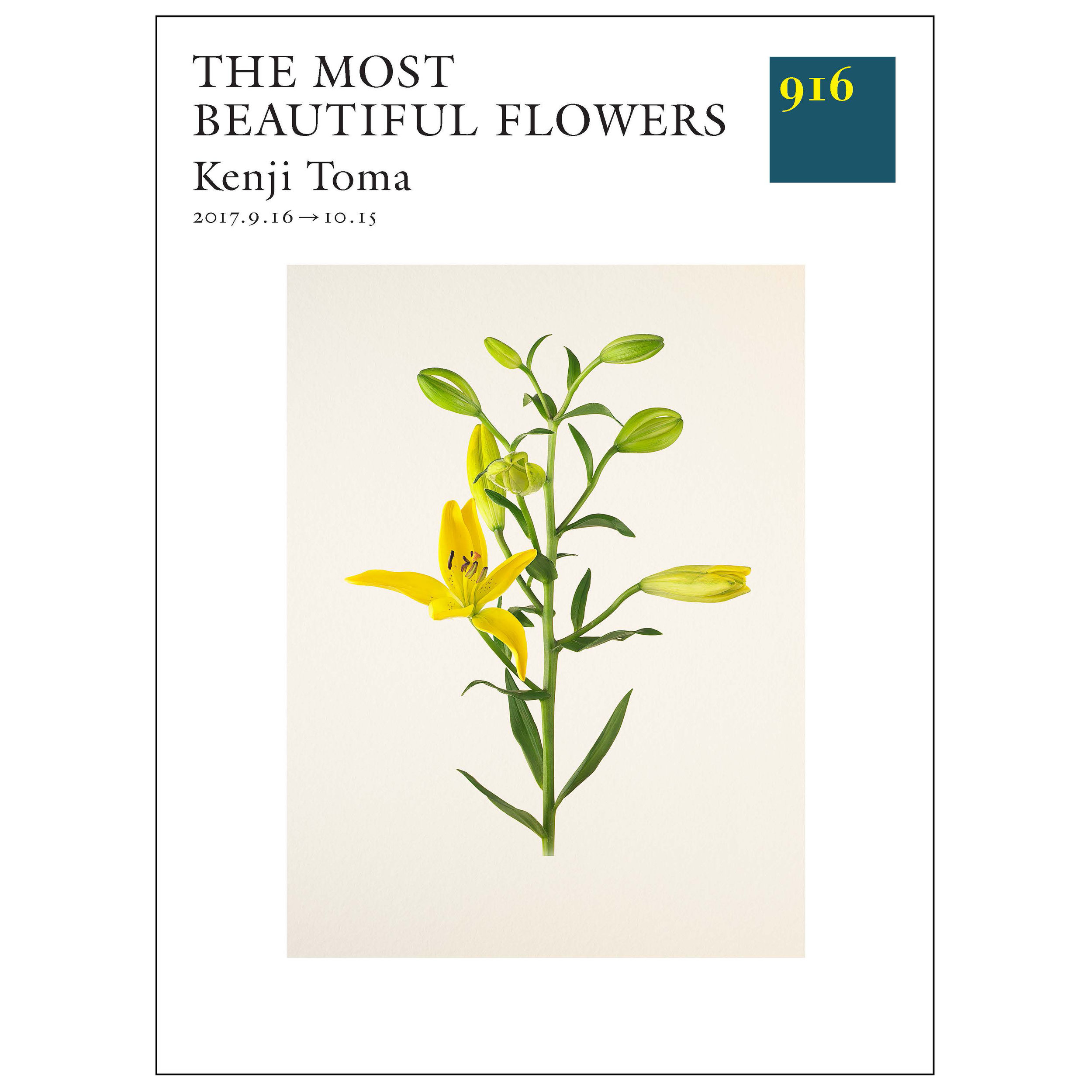 The Most Beautiful Flowers   Gallery 916, Tokyo 09/16 - 11/12/2017