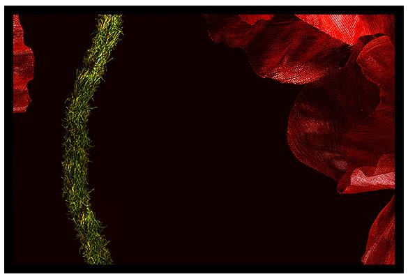Red Poppy_c5.jpg