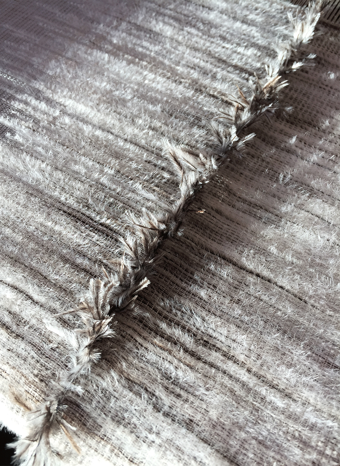 Close up shot of the textures created using only ostrich feathers in the 'Feathered Fabrics'.