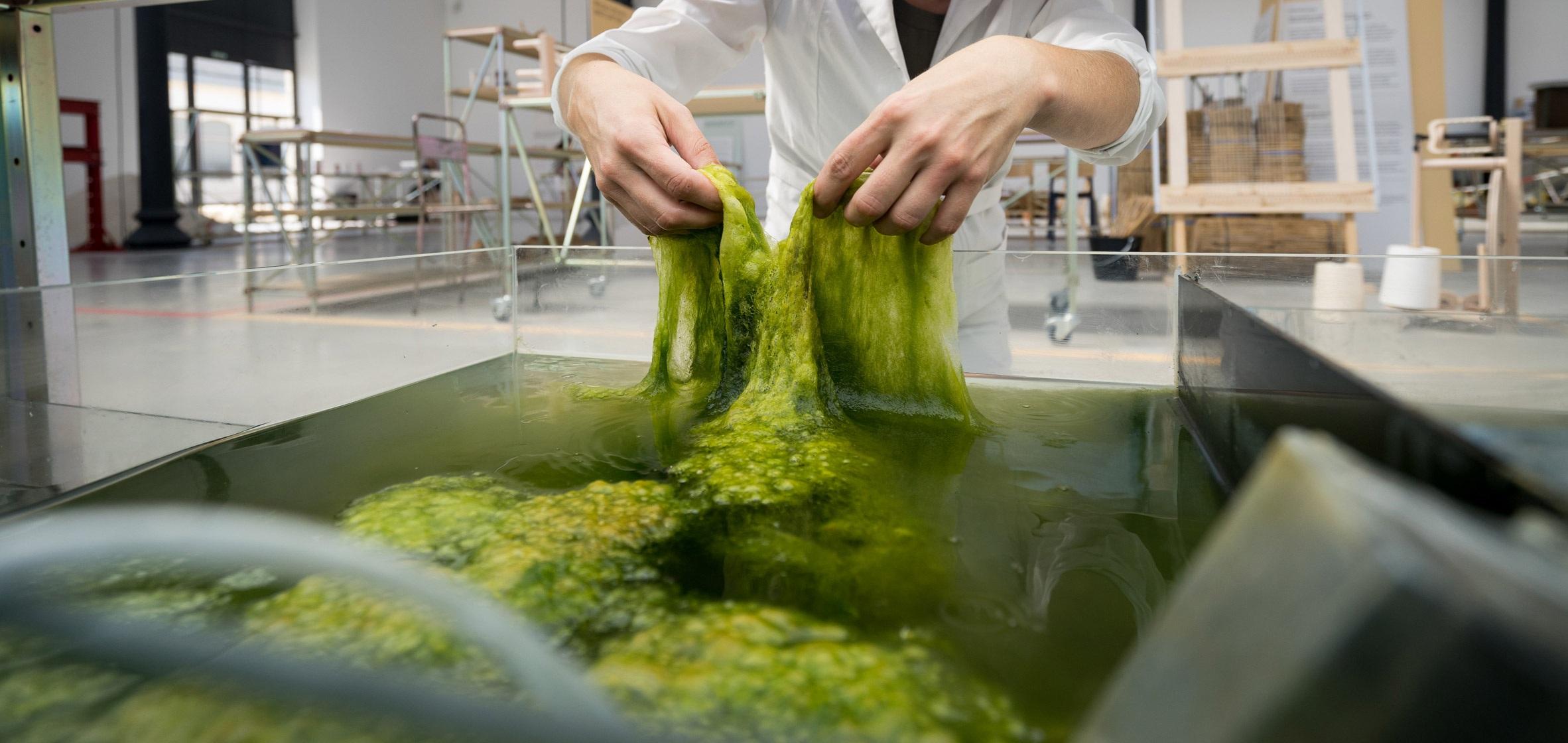 eric-klarenbeek-maartje-dros-change-system-dutch-design-week-algae_dezeen_2364_col_9.jpg