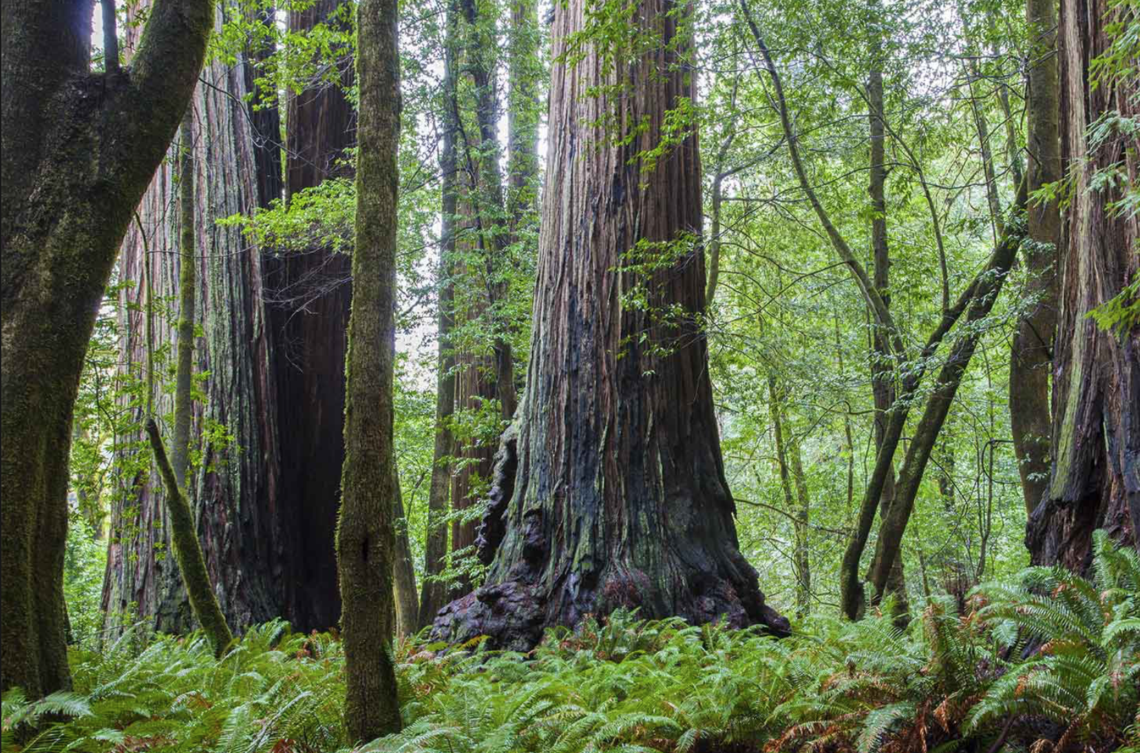 REDWOOD GROVE:  who anchors you when facing life's headwinds