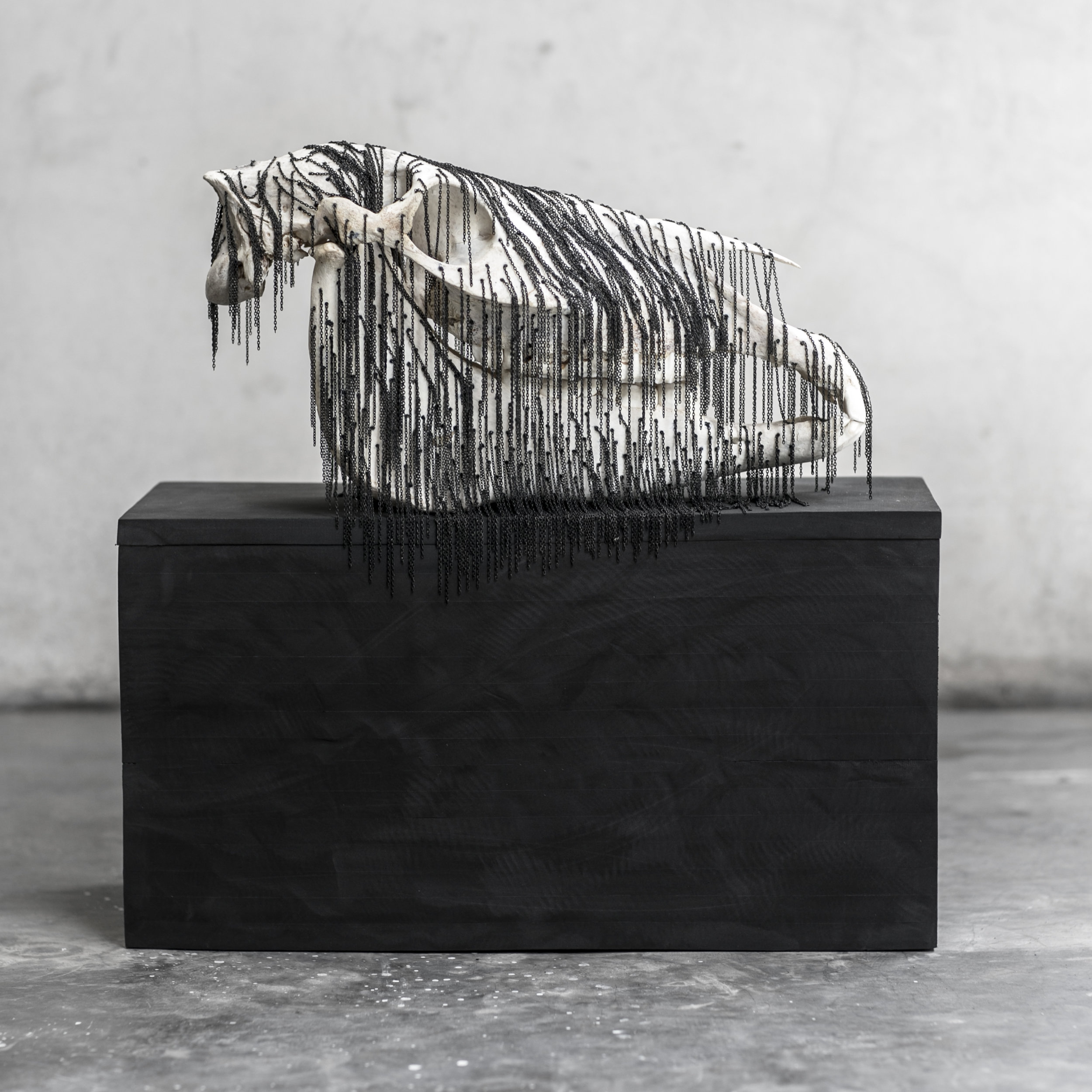 "Kuda  , Horse Skull/Jewelry Chain, 7.25"" W, 16.75"" L, 10"" H"