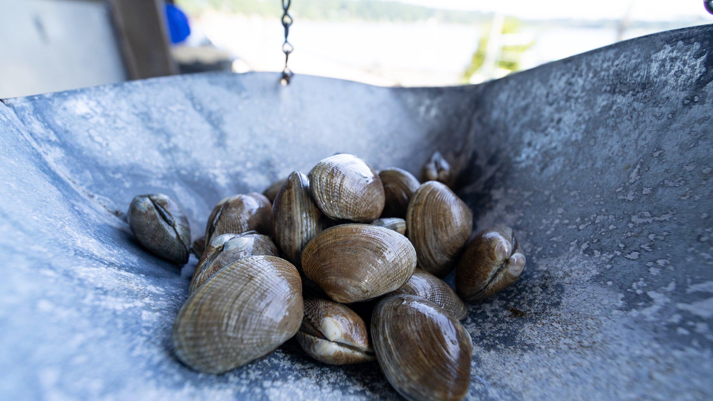 clams_westcott_bay_shellfish.jpg