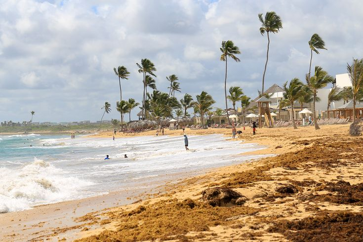 Dreams Punta Cana manicures its section of Uvero Alto, but the true character of the beach is visible down the coastline. Seaweed abounds and the surf is more like the Atlantic Ocean than the Caribbean Sea.
