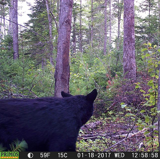 With Bear season in full swing, finally getting out there this weekend and hoping for the best!