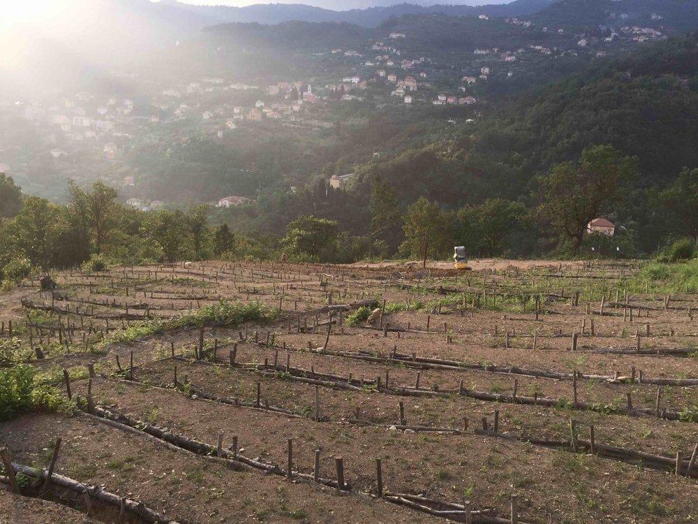 La nostra scelta di vita - Produzione biologica e sostenibile con amore per la natura