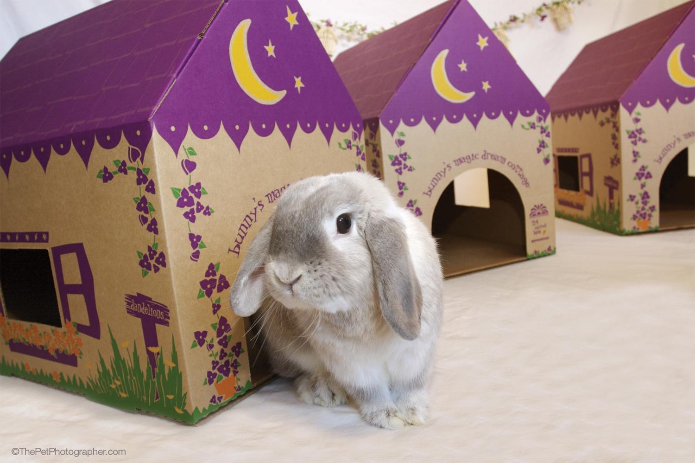 Bunny's Magic Dream Cottage