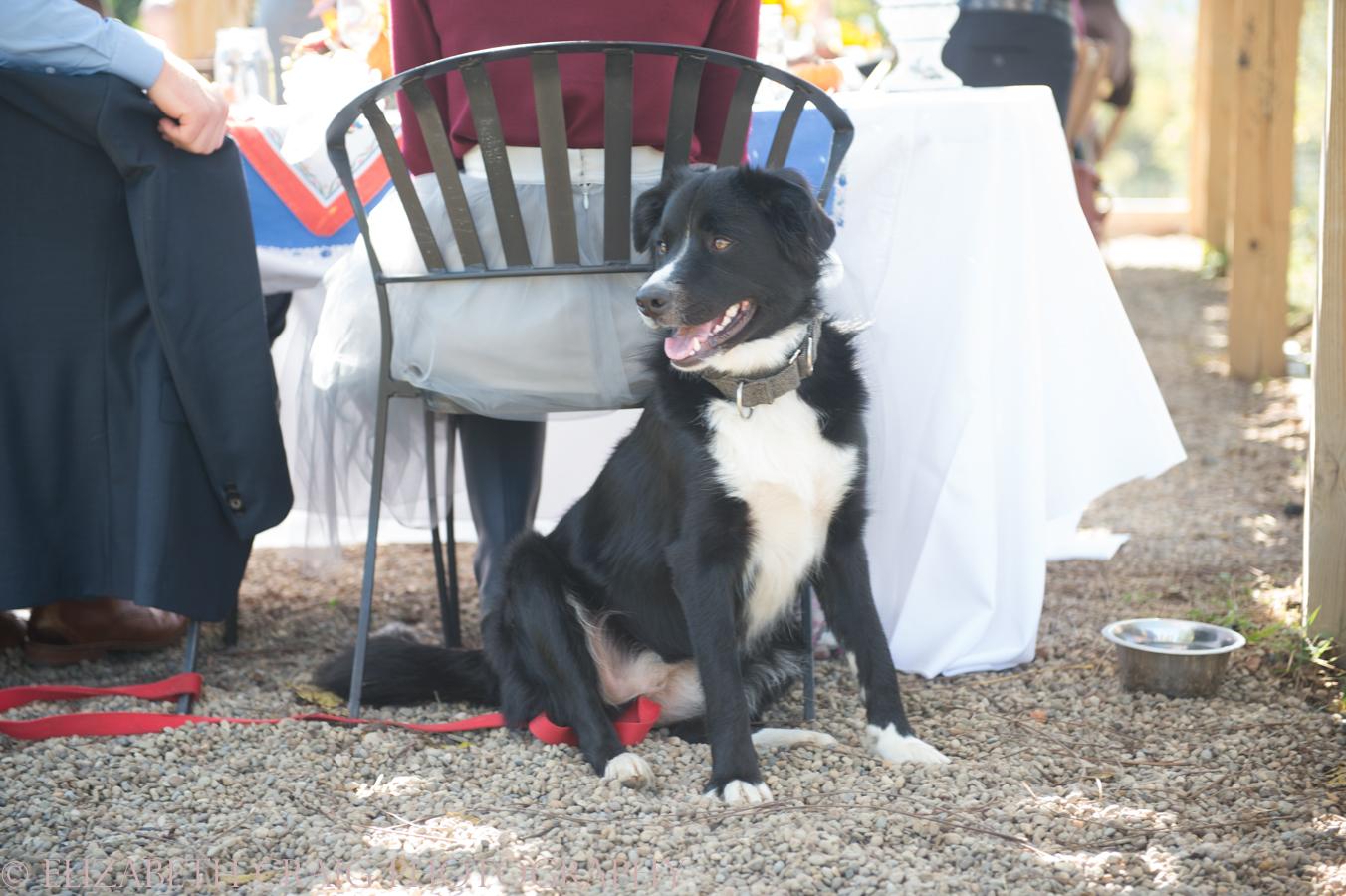 Pittsburgh Small Weddings | Churview Farm-92