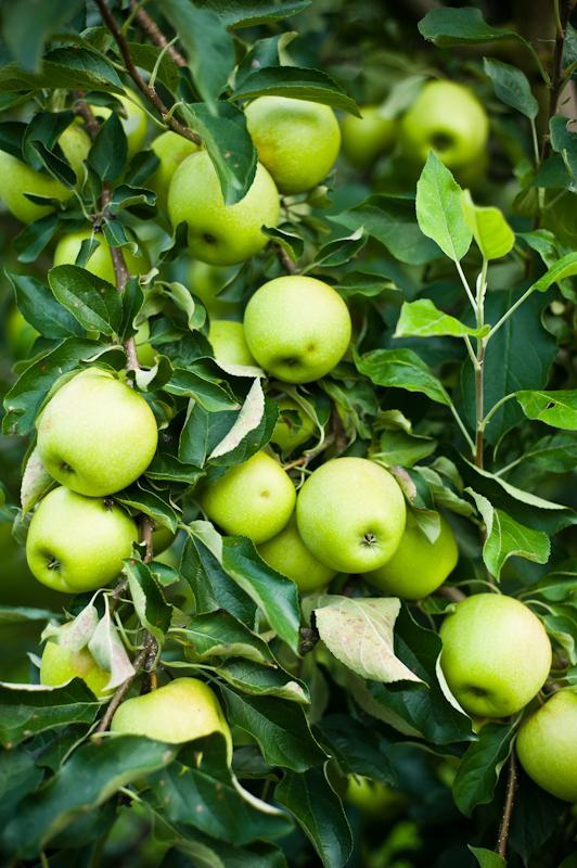 greendance-winery-apple-orchard-weddings-0007