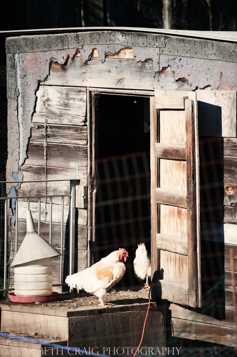 Pittsburgh Small Weddings | Churview Farm-16