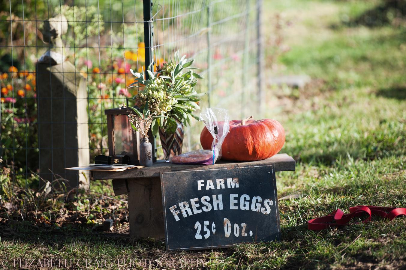 Pittsburgh Small Weddings | Churview Farm-9