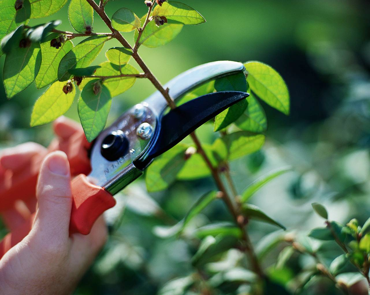 WHERE, WHEN AND HOW TO PRUNE? - It's really not that difficult or stressful!